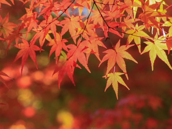 紅葉イメージ写真